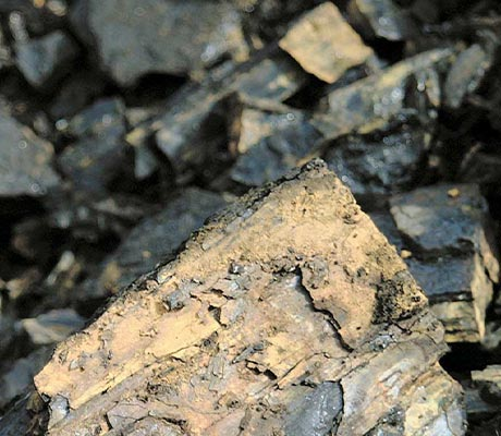 Close-up image of various types of coal